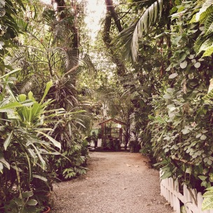 The lush jungle on the other side